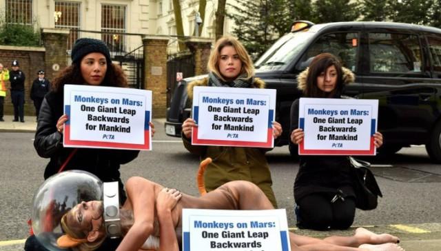 защита обезьян